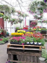 garden plants flower grower