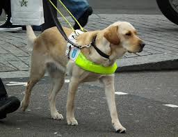 How Does A Guide Dog Help A Blind Person Hd Warrior Blog Archiv U201cbe My Eyes U201d You Can Help A Blind