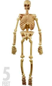 posable skeleton size poseable skeleton 2ft x 5ft party city