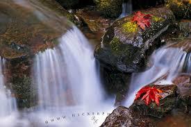 beautiful fall point 23
