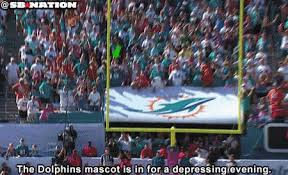 Funny Miami Dolphins Memes - dolphins mascot mistakenly celebrates after miami misses game tying