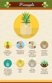 infographic 19 foods you can regrow from scraps