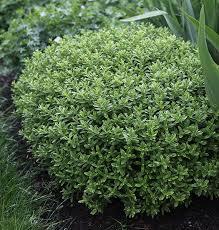 Flowering Shrubs For Partial Sun - 3891 best ideas for garden shrubs images on pinterest garden