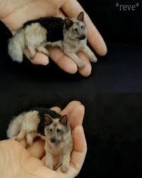 Best 25 Miniatures Ideas On by Best 25 Miniature German Shepherd Ideas On Pinterest American