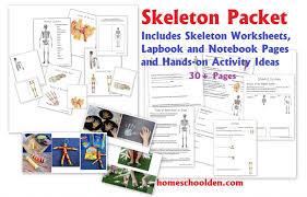 human body activities u2013 digestive system homeschool den