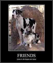 Great Dane Meme - best corgi memes part 5 corgi dogs