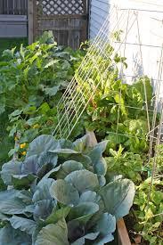 growing an urban vegetable garden is hard borealis