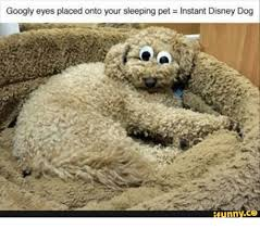 Googly Eyes Meme - 25 best memes about dog with googly eyes dog with googly