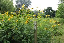 native plants michigan isabella conservation district environmental education program