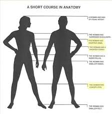 Anatomy Difference Between Male And Female Why Is The World Male Dominated Quora