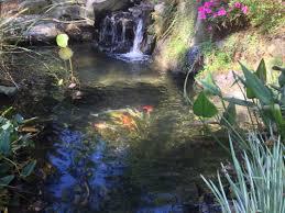 ndh aquascapes fayetteville nc backyard pond ndh aquascapes