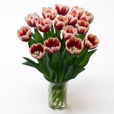 Skagit Valley Tulip Festival Bloom Map Fresh Cut Flowers U0026 Spring Flowering Bulbs Tulips Com