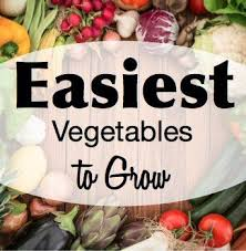 here are the easiest vegetables to grow best gardening tips