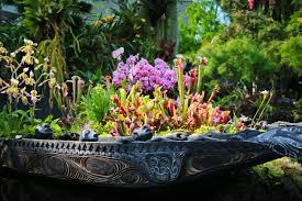 beautiful plants singapore u0027s incredible gardens by the bay bob around the world