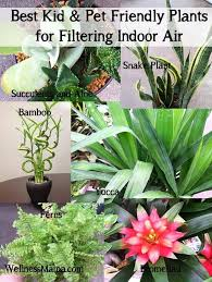 Air Purifying Plants 9 Air by 33 Best Plants Images On Pinterest Herbs Garden Gardening And