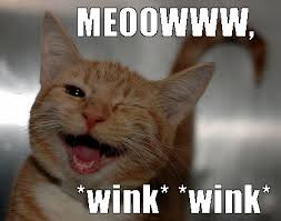 Wink Meme - wink wink cute pinterest wink wink cat cat and cat