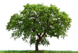 the top ten trees rereviewview