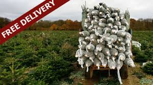 christmas tree delivery delivery information send me a christmas tree