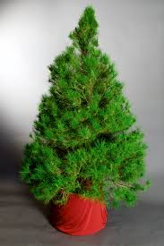 fine decoration living christmas trees tree christmas decor