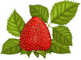 strawberry fruit clipart clipground