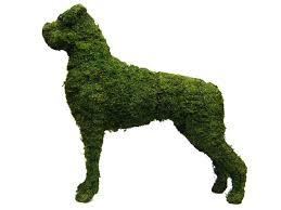 boxer dog vine boxer dog garden topiary frame