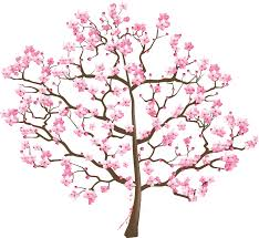 cherry blossom tree suzuki association of the americas