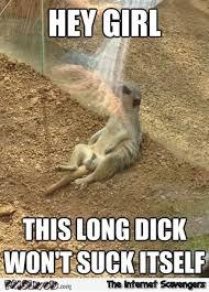 Funny Dick Memes - this dick won t suck itself funny meerkat meme pmslweb