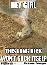 Vulgar Memes - this dick won t suck itself funny meerkat meme pmslweb