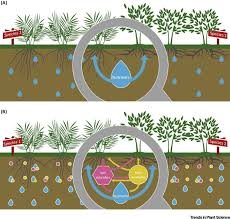 root root interactions towards a rhizosphere framework trends in