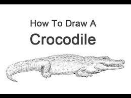 how to draw a crocodile youtube