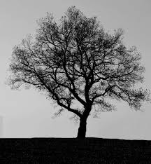 black black and white grey tree white inspiring picture on