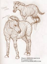 daily animal sketch u2013 zebra u2013 last of the polar bears