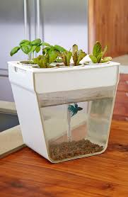 grow a sustainable herb garden inside the fish feeds the plants