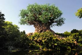 time lapse the tree of grow at disney s animal
