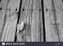 single leaf laying on a boardwalk a state park in florida on a