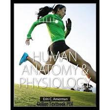 Human Anatomy And Physiology Pdf File Anatomy U0026 Physiology By Erin C Amerman Pdf