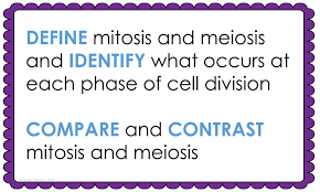 mitosis and meiosis lesson plan u2013 a complete science lesson using