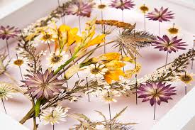pressed flowers pressed flowers prerequisites arts council