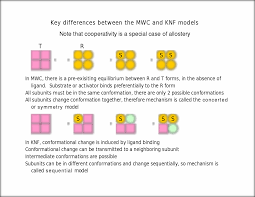 key differences between the mwc and knf models note that