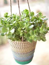 Miniature Indoor Plants by Download Best Outdoor Plants Solidaria Garden