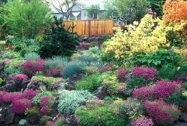evergreen garden plans full image for garden colourful conifer