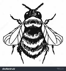 drawing of a bumble bee bumblebee harveytolibao on deviantart