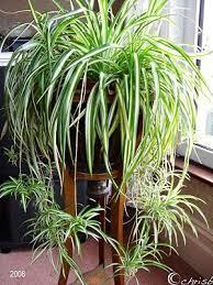 Low Light Indoor Flowers 88 Best Hanging Houseplants Images On Pinterest Flowers