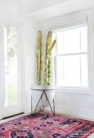 best 25 indoor cactus plants ideas on pinterest cool indoor