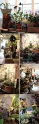 best 25 flower shop interiors ideas on pinterest florist shop