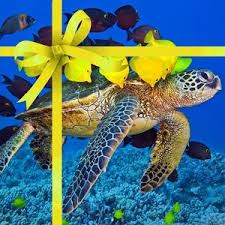 christmas gift ideas for scuba divers 30 to 60