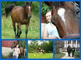 15 minute horse fix behavior tips and training advice