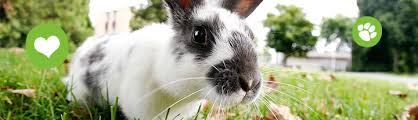 rabbit banner rabbit helpful links and information pugh zoo rescue