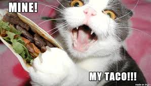 Crazy Cat Memes - crazy taco cat meme on imgur