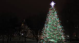 the boston common tree by the numbers boston magazine